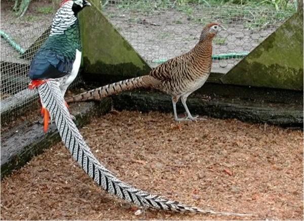 Красивые птицы в загоне