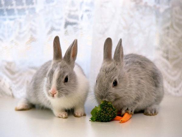 Как приручить кролика к рукам: подробная инструкция с фото и видео