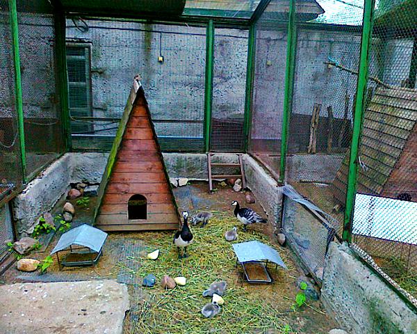 Один из вариантов обустройства вольера для фазанов