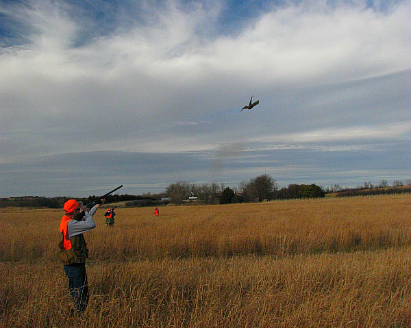 Осенняя охота на фазанов