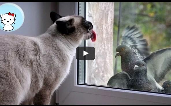 Смешные голуби и кошки
