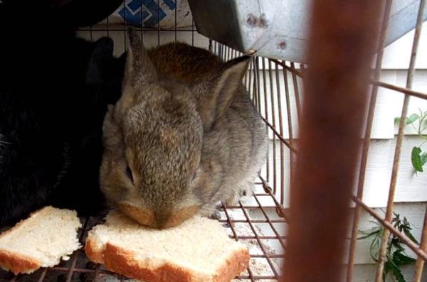 Крольчонок ест хлеб