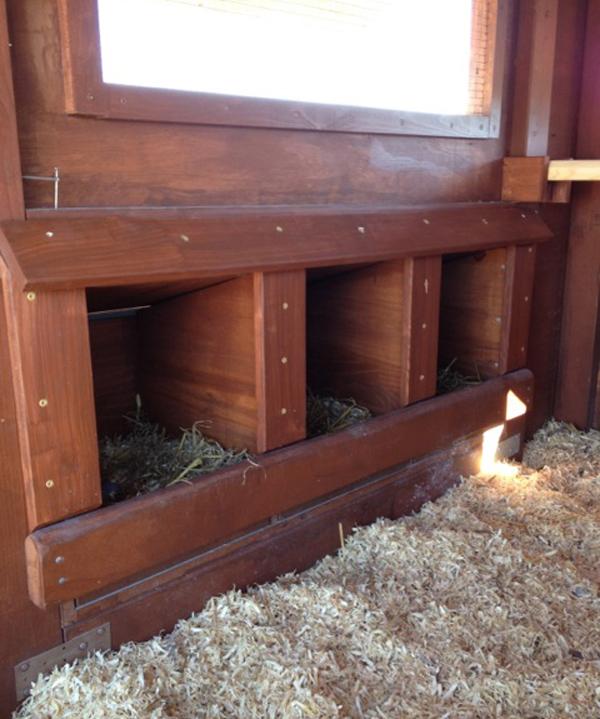 Три гнезда в курятнике