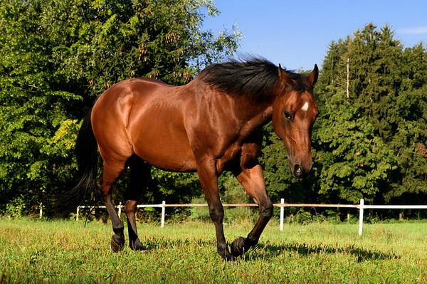 Красивая лошадь в леваде
