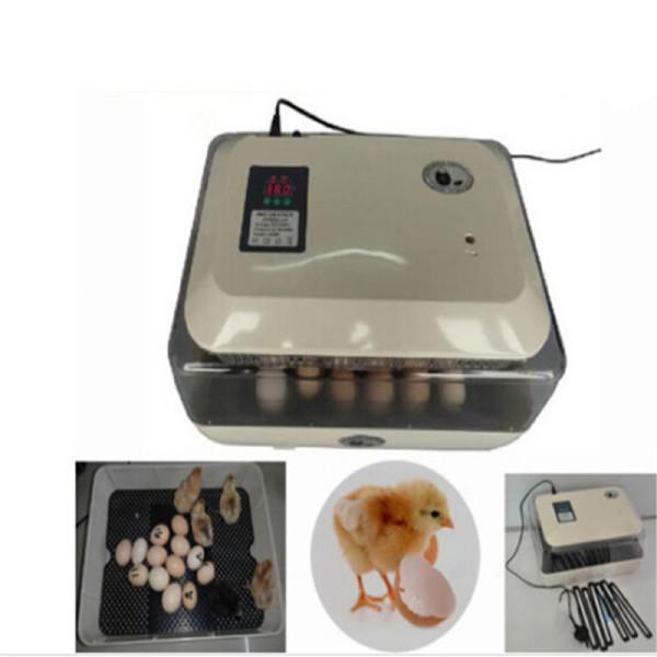 Электронный заводской инкубатор с перепелиными яичками