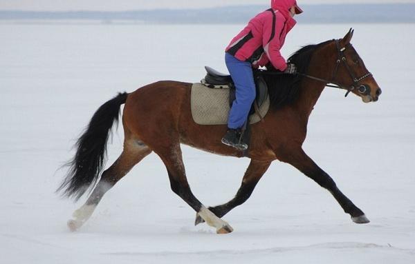 Всадница на коне