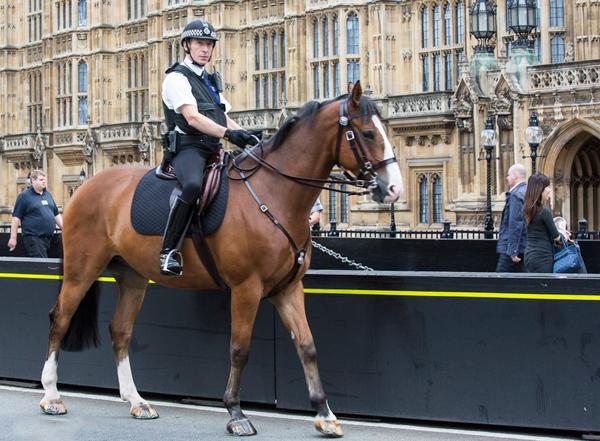 Полицейский сидит верхом на коне