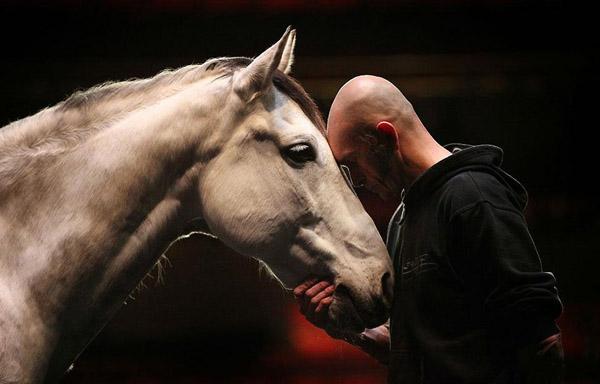 Человек и конь крупным планом