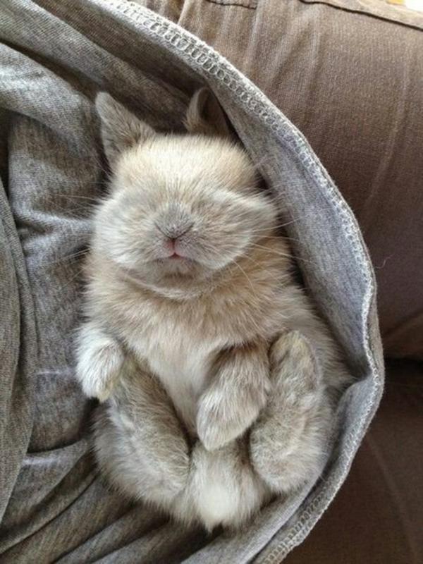 Маленький пушистик спит на руках у хозяина