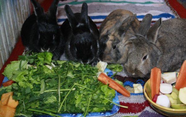 Что едят кролики в разное время года