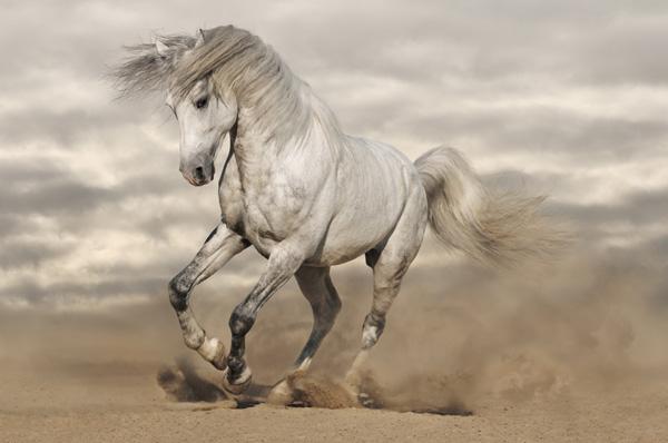 Красивый конь скачет по песку