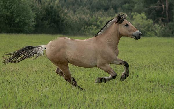 Галопирующий конь на зеленой поляне