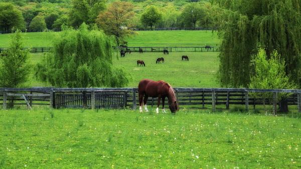 Лошади на выпасе в загоне