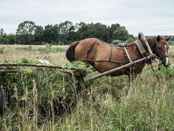 Лошадь, запряженная в телегу