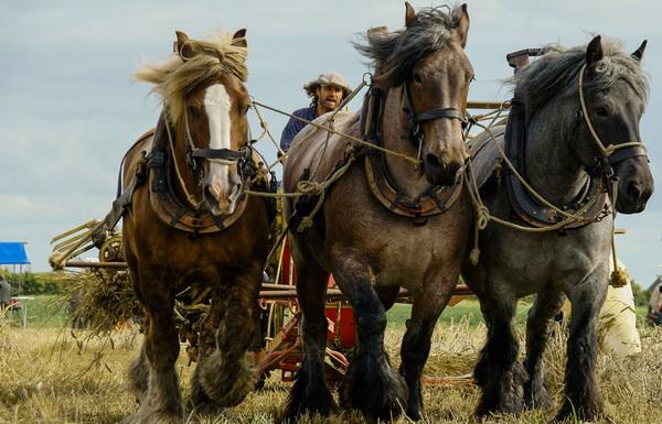 Лошади на уборке сена