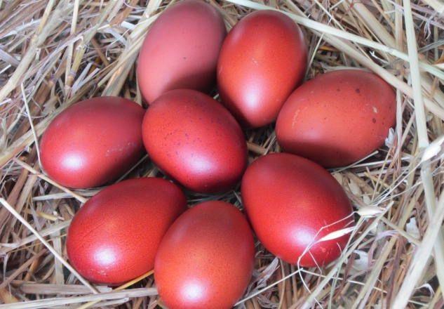 Коричневые яйца на сене