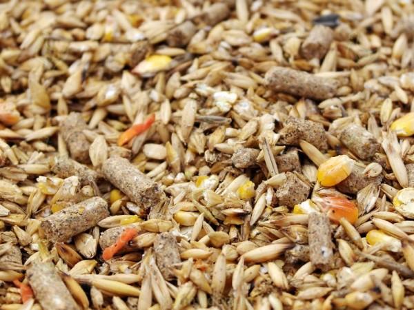 Зерновая смесь для кур крупным планом