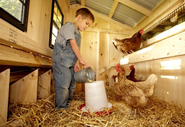 Мальчик кормит кур в сарае