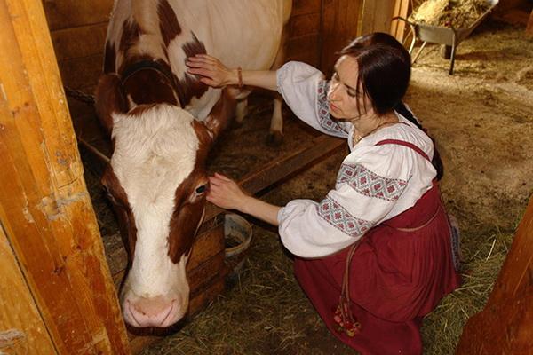 Девушка возле коровы