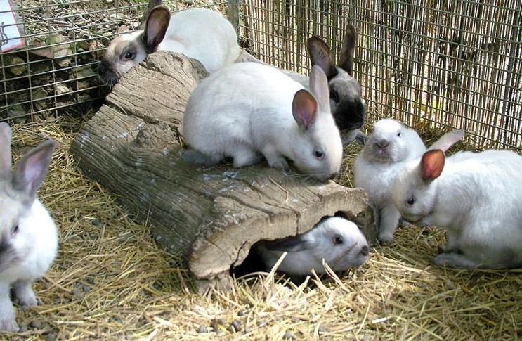 Крольчата, помещенные в загон