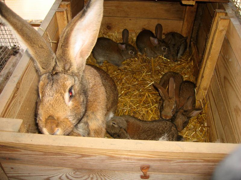 Крольчиха и малыши в деревянном ящике