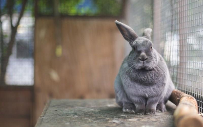 Серый кролик в клетке