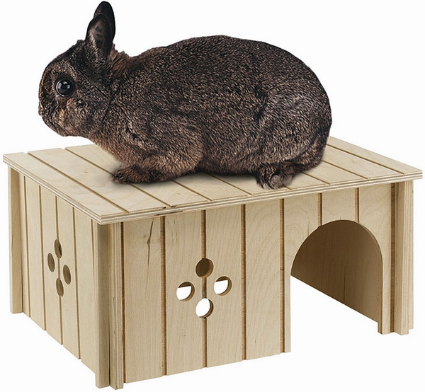 Кролик сидит на домике