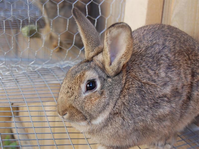 Кролик крупным планом