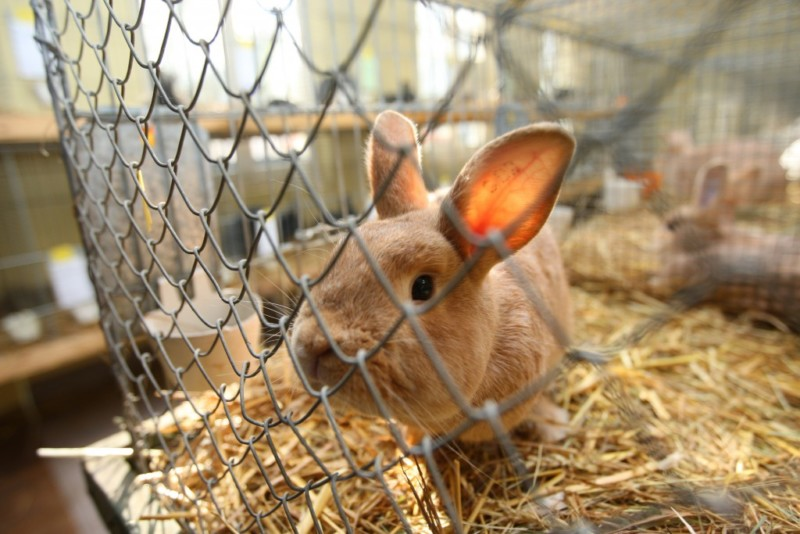 Кролик смотрит через ячейки клетки
