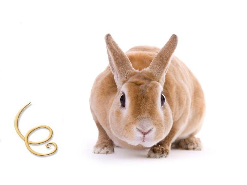 Кролик со стоячими ушками