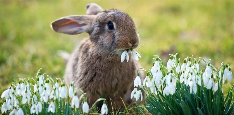 Кролик с подснежниками