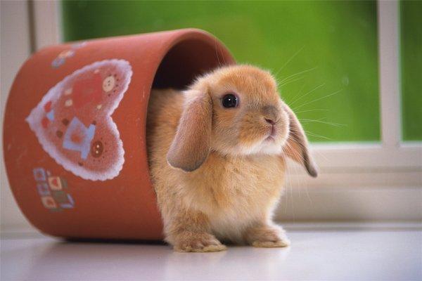 Маленький кролик сидит в горшочке