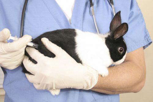 Кролик на руках у врача