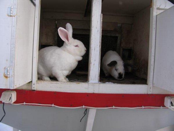 Кролики в клетке Михайлова