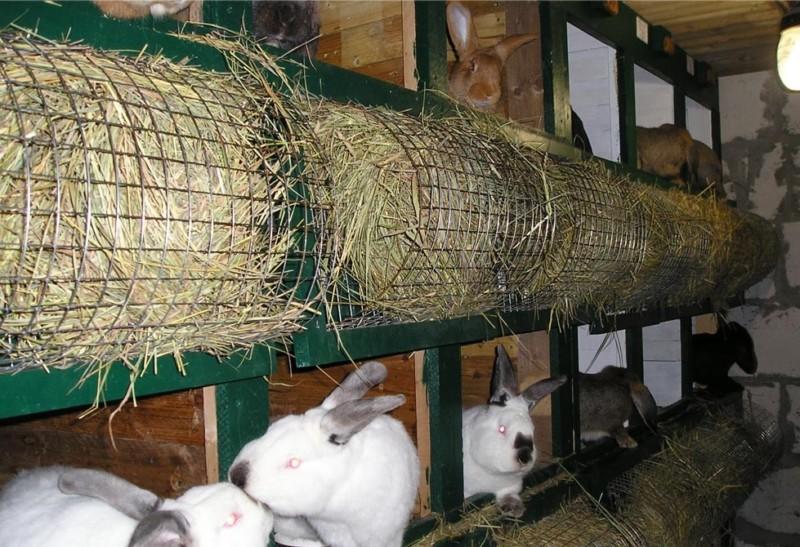 Кролики в отдельных секциях