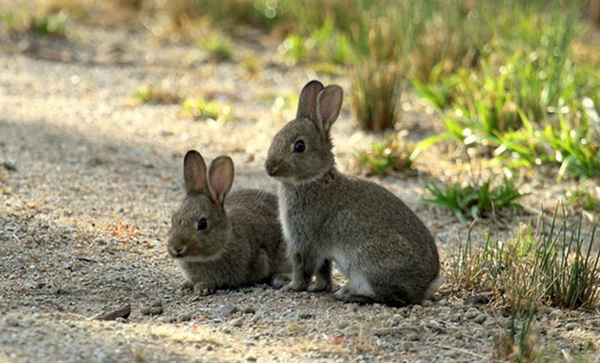 Крольчата возле норки