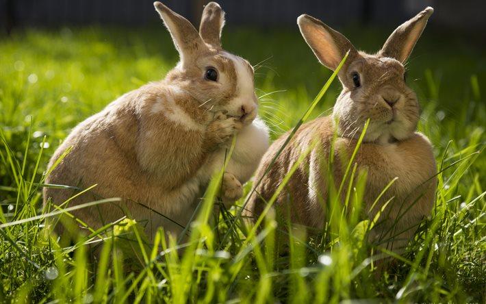 Кролики едят мокрую траву