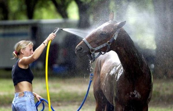 Купание коня из шланга