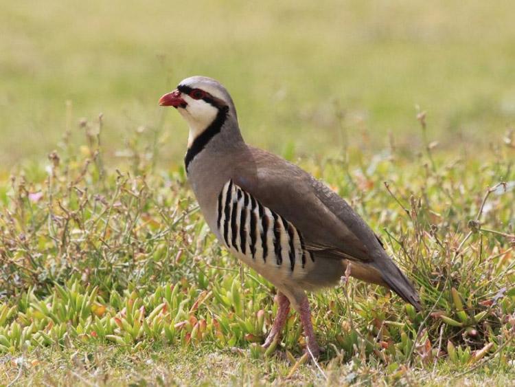Застывшая в траве птичка