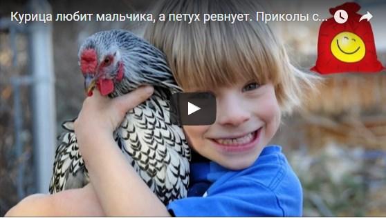 Петух ревнует курицу а мальчику