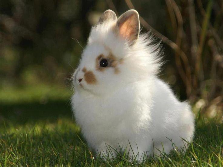 Львиноголовый кролик белого цвета в траве