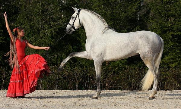Танец фламенко с лошадью