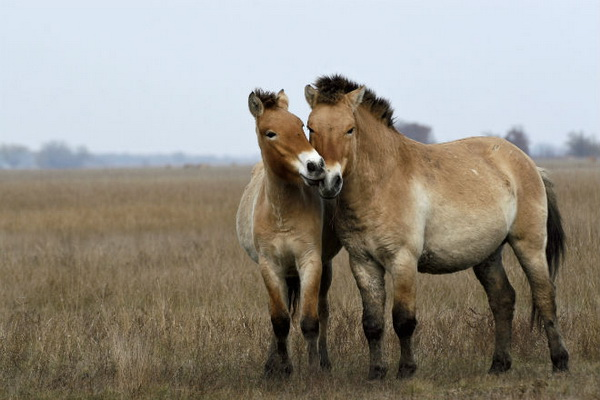 Две лошади в степи