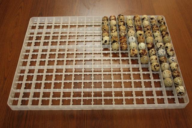 Пластиковый лоток с перепелиными яйцами