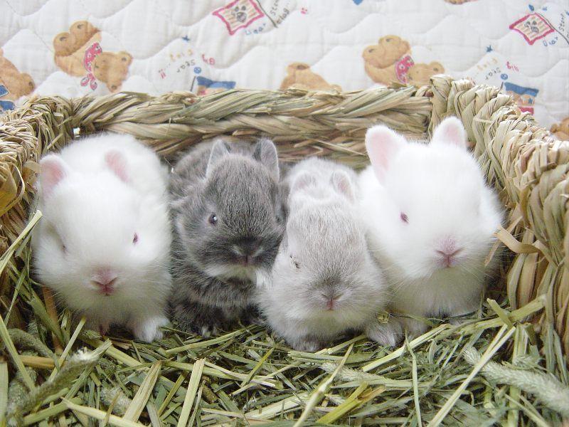 Малыши в плетеной корзинке