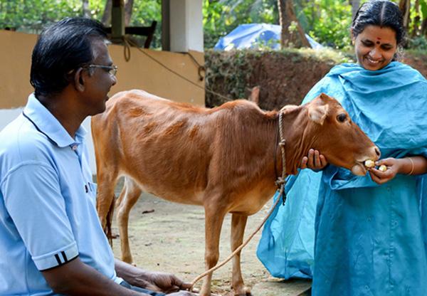 Самая маленькая коровка и ее семья