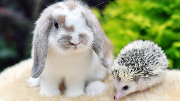 Кролик и еж на траве