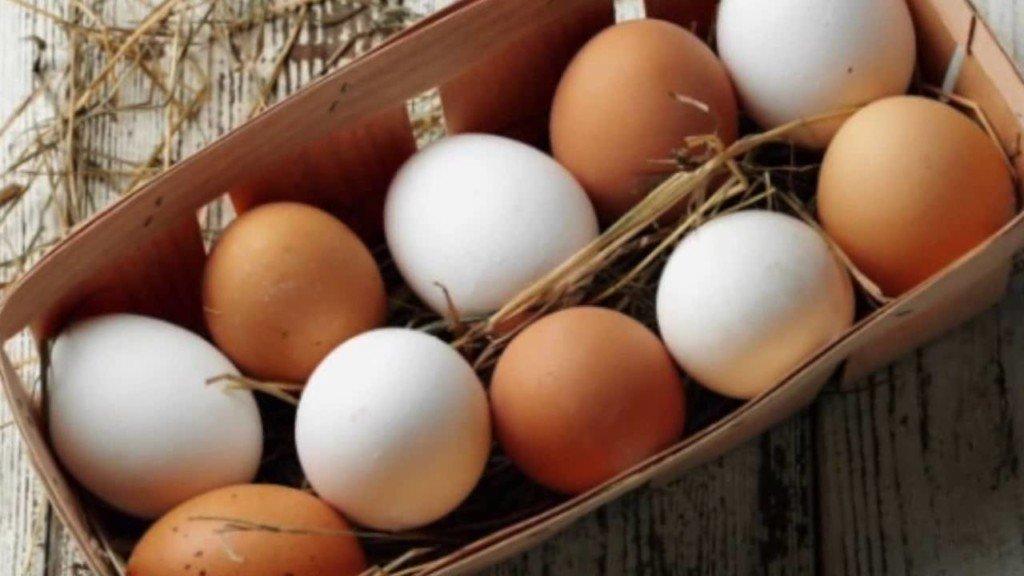 Белые и коричневые куриные яйца