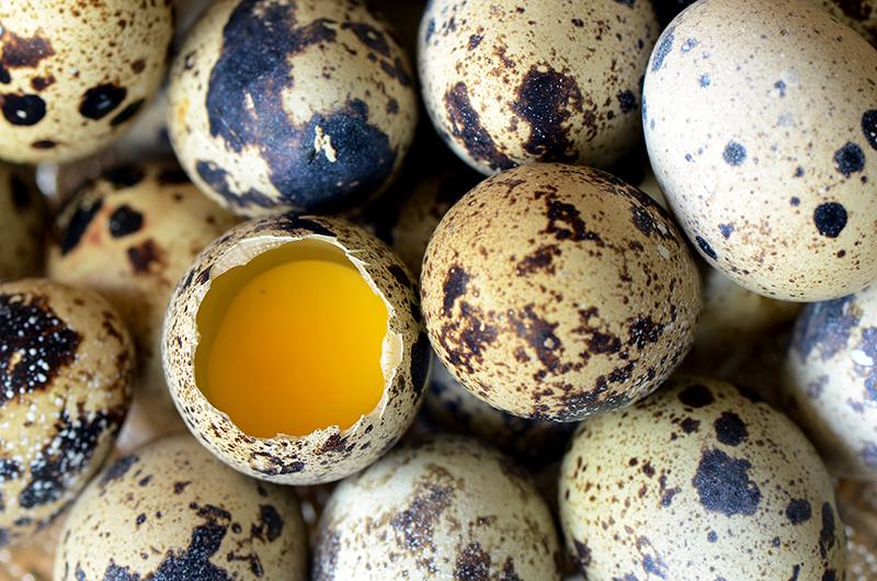 Много перепелиных яиц