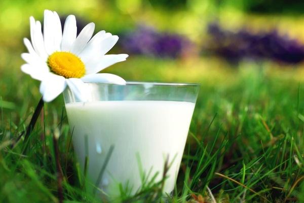 Стакан молока с ромашкой